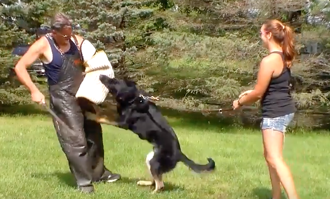Foundation Bitework Video of Young German Shepherd